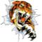 Tenafly Tigers